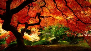 nature /quetedesoi.wordpress.com